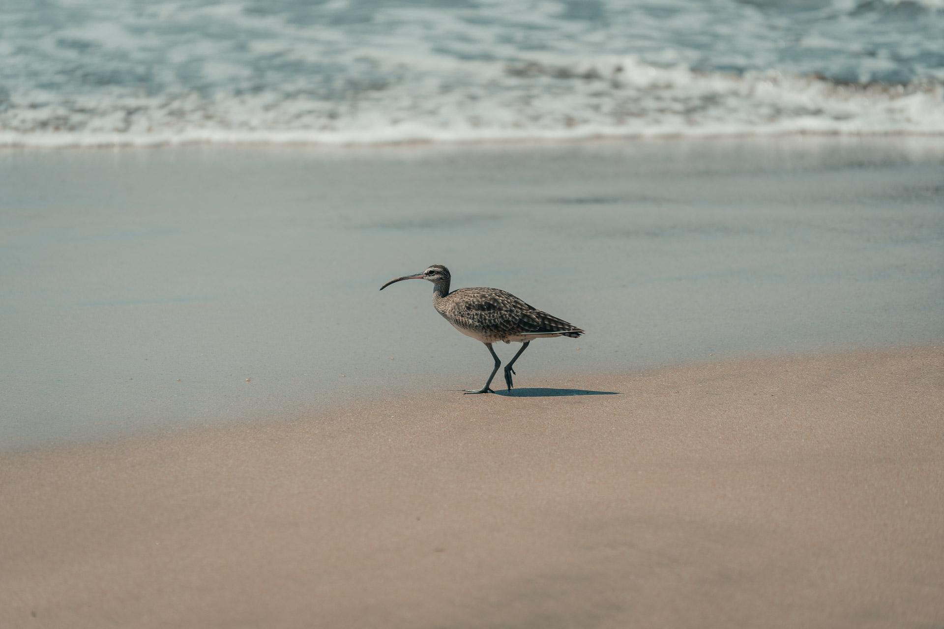 photo animal oiseau